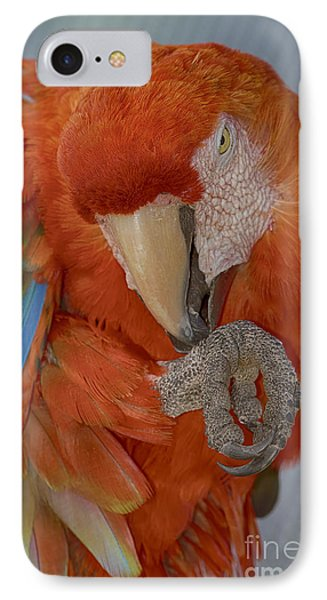 Pass The Hand Lotion Please IPhone Case by Anne Rodkin