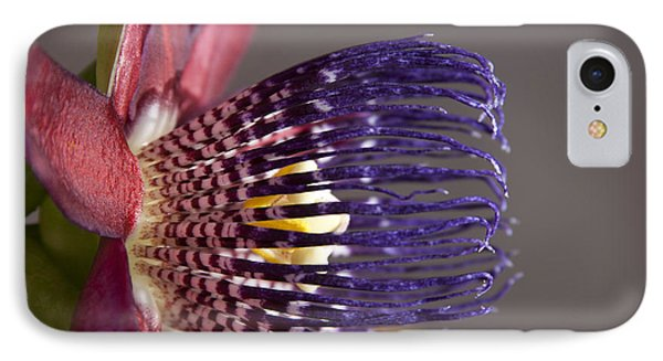 Passiflora Alata - Passion Flower - Ruby Star - Ouvaca IPhone Case by Sharon Mau