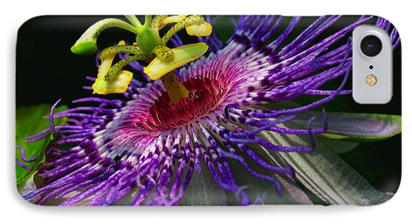 Passion Flower Phone Case by Douglas Stucky