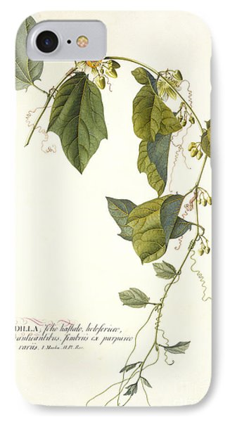 Passion Flower IPhone Case by Georg Dionysius Ehret