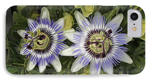 Passion Flower Hybrid Cultivar IPhone Case by Tony Craddock