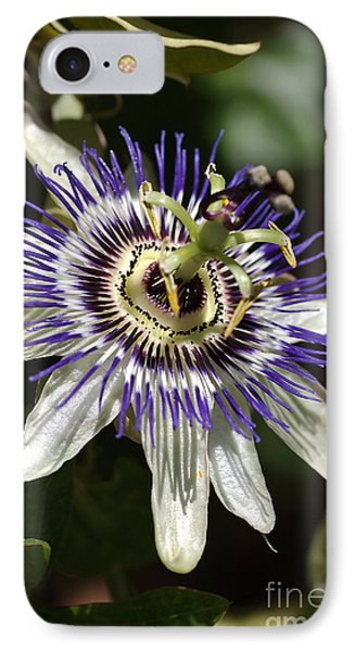 Passion-flower IPhone Case by Joy Watson