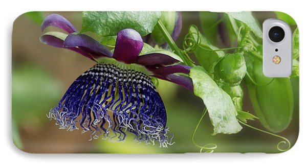 Passion Flower - Ruby Glow IPhone Case by Kim Hojnacki
