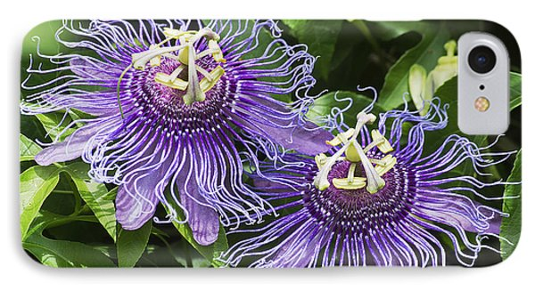 Passion Flowers IPhone Case by Kenneth Albin