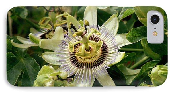 Passionflower (passiflora Caerulea) IPhone Case by Adrian Thomas