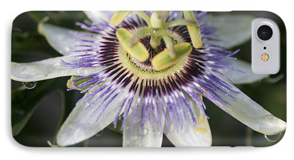 Passionflower Phone Case by Richard Thomas