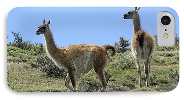 Patagonian Guanacos IPhone Case by Michele Burgess