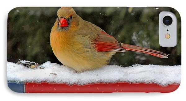 Patriotic Cardinal Phone Case by Mary Williamson