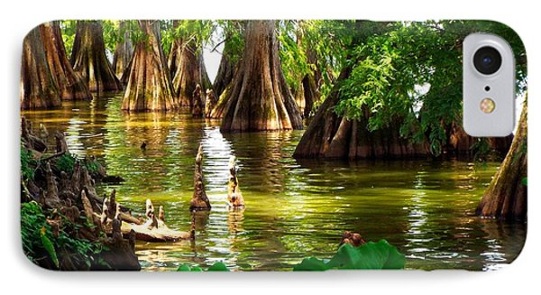 Peaceful Cypress Trees  IPhone Case by Cindy Croal