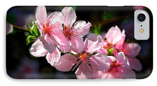 Peach Blossoms IPhone Case by Ludwig Keck