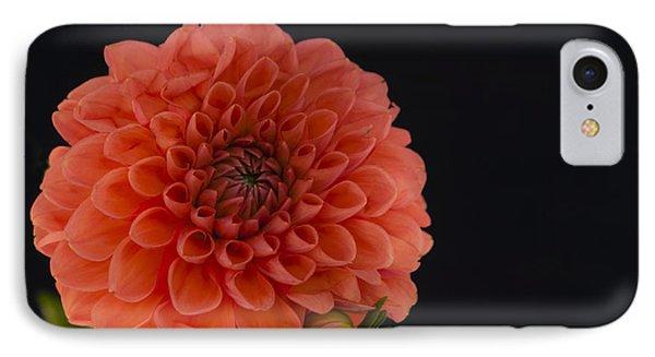 Peach Dahlia IPhone Case