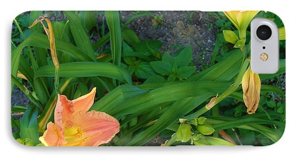 Peach Daylily IPhone Case
