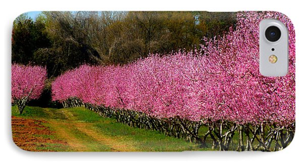 Peach Orchard In Carolina Phone Case by Lydia Holly