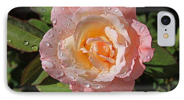 Peach Rose IPhone Case by Gary Kaylor