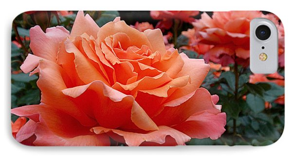 Peach Roses IPhone Case by Rona Black