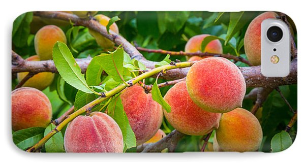 Peaches IPhone Case by Inge Johnsson