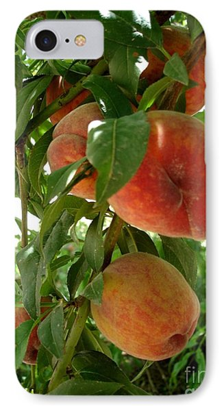 IPhone Case featuring the photograph Peaches On The Tree by Kerri Mortenson