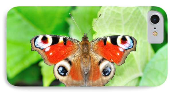 Peacock Buterfly IPhone Case