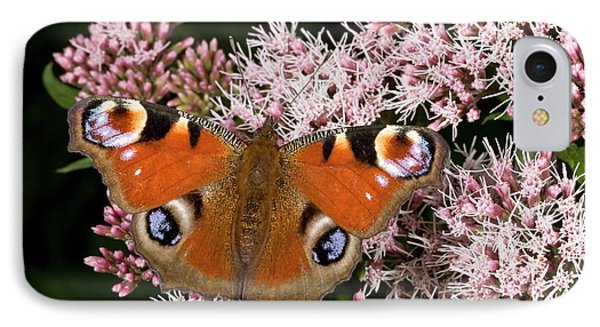 Peacock Butterfly On Hemp Agrimony IPhone Case by Bob Gibbons