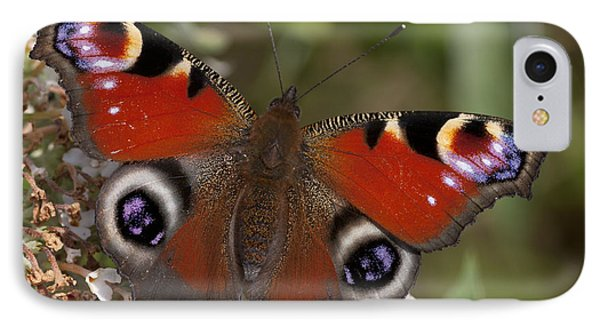 Peacock Butterfly IPhone Case by Richard Thomas