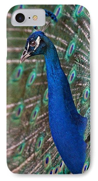 Peacock Display Phone Case by Susan Candelario