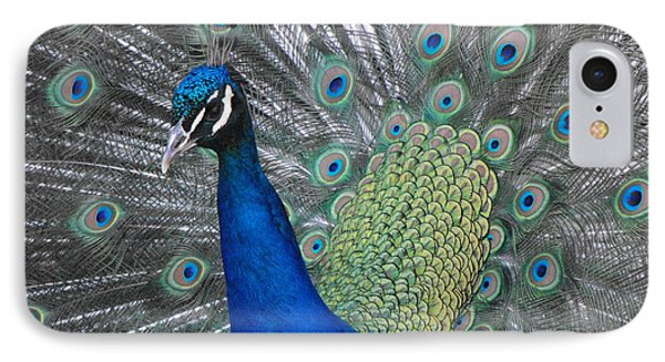 Peacock IPhone Case by Erick Schmidt