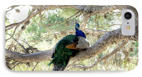 Peacock IPhone Case by Gina Dsgn