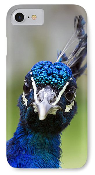 Peacock Stare Down IPhone Case by Ross G Strachan