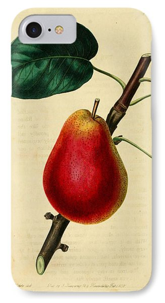 Pear 1829 Phone Case by Philip Ralley