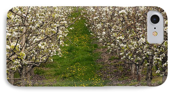 Pear Blossom Lane IPhone Case by Mike  Dawson