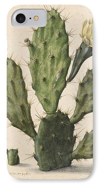 Pear Cactus In Bloom, Herman Saftleven IPhone Case by Quint Lox