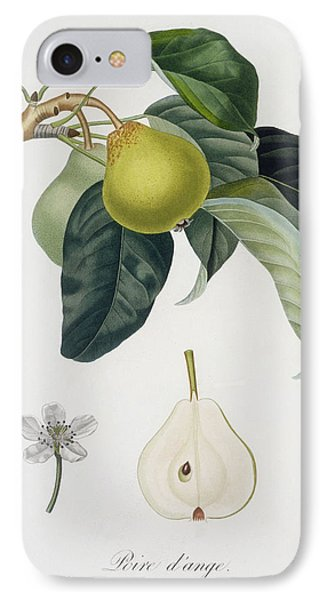 Pear IPhone Case by Pierre Antoine Poiteau