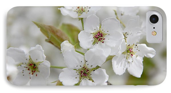 Pear Tree White Flower Blossoms Phone Case by Jennie Marie Schell