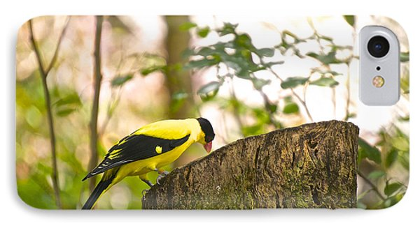 Pecking Away IPhone Case by Judy Kay