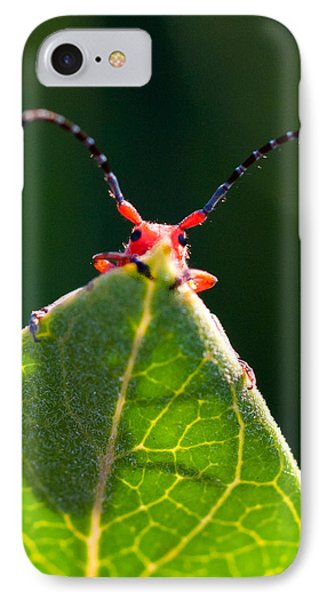 IPhone Case featuring the photograph Peek-a-boo by Janis Knight