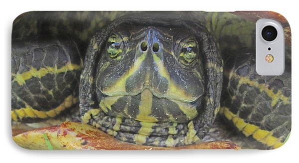 IPhone Case featuring the photograph Peek A Boo by Judith Morris
