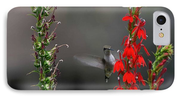 IPhone Case featuring the photograph Peek A Boo by Judy Wolinsky