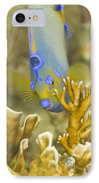 IPhone Case featuring the photograph Peek-a-boo by Paula Porterfield-Izzo