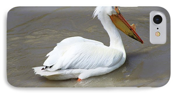 IPhone Case featuring the photograph Pelecanus Eerythrorhynchos by Alyce Taylor
