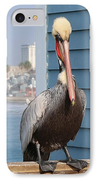 Pelican - 4 IPhone Case by Christy Pooschke