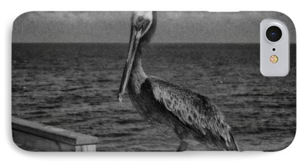 Pelican 3 IPhone Case by J Riley Johnson