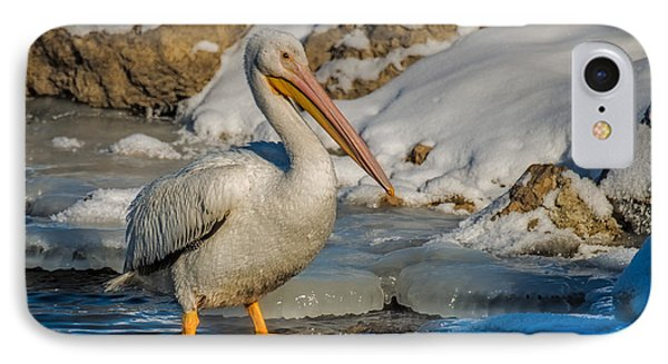 Pelican And Ice IPhone Case by Paul Freidlund