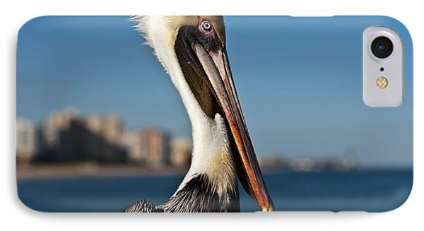 IPhone Case featuring the photograph Pelican by Barbara McMahon