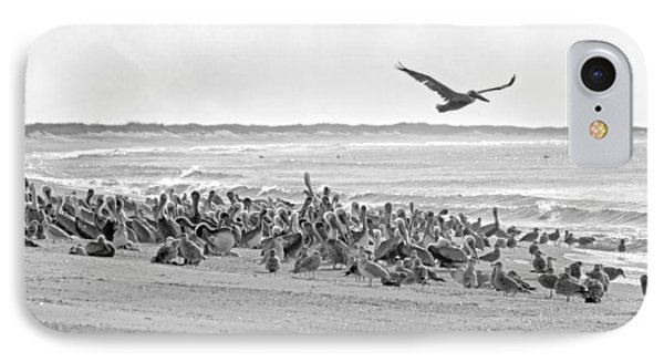 Pelican Convention  IPhone Case by Betsy Knapp