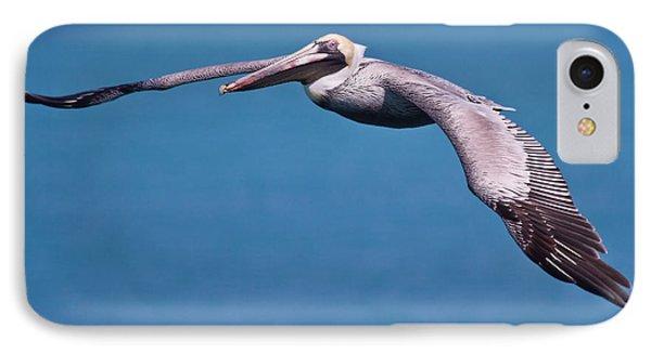 Pelican In Flight Florida Phone Case by Mr Bennett Kent