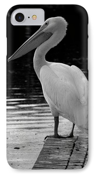 Pelican In The Dark IPhone Case by Laurie Perry