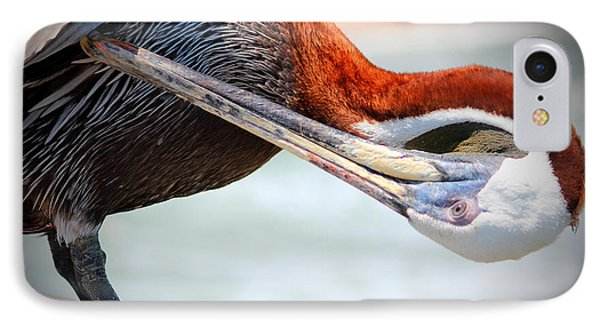 Pelican Itch IPhone Case by Cynthia Guinn