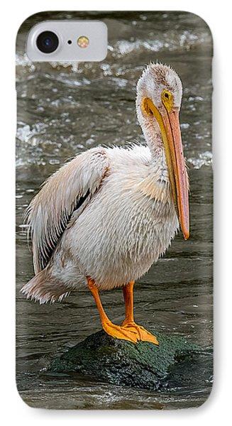 Pelican On A Rock IPhone Case by Paul Freidlund
