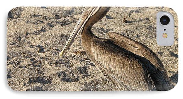 Pelican On Beach IPhone Case by DejaVu Designs
