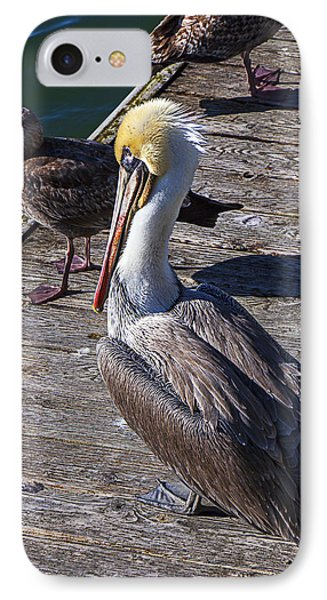 Pelican On Dock IPhone Case